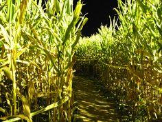 Corn Maze at Night.