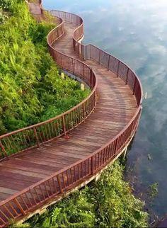 Fotografia zobrazujúca prekrásnu zakrivenú drevenú dosku chodník v tropickom prírodnom parku. Tento prirodzený štýl chodníka je postavený pozdĺž jazera a krivky sledujú okraj jazera. Milovníci prírody dokážu získať pohľad na jazero, ako aj tropický divoký život a rastliny na druhej strane. Miesto je Singapur, známe Garden City juhovýchodnej Ázie.
