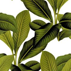 Palm In Palm ~ White  fabric by peacoquettedesigns on Spoonflower - custom fabric