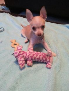 I just love it when they get me toys that are bigger than I am.
