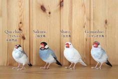 リアル 文鳥 クリップホルダー 白文鳥 桜文鳥 ゴマシオ文鳥