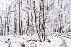#winter #hungary #szárliget #nature #photooftheday #mik #instadaily #iphotography #nikon #d7100 #hiking #kéktúra #bluetrail #vértes #foggy #snow #trees