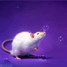 Funny rats by Diane Özdamar