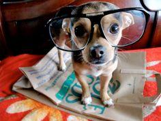dog. #dog #cute #nerd
