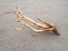 Large Manzanita branch wood stump