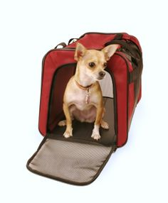 Snoozer Collapsible Travel Crate from RadioFence.com is lightweight and collapsable with wide mesh panels to allow clear visibility for your dog when traveling. Many sizes available starting at only $49.95 plus FREE SHIPPING! (http://www.radiofence.com/snoozer-collapsible-travel-crate/)
