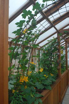 Diy Greenhouse Plans, Dome Greenhouse, Backyard Greenhouse, Greenhouse Gardening, Backyard Landscaping, Greenhouse Attached To House, Landscape Design, Garden Design, All Nature