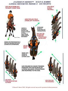The most important role of equestrian clothing is for security Although horses can be trained they can be unforeseeable when provoked. Riders are susceptible while riding and handling horses, espec… Horse Riding Tips, Horse Tips, Trail Riding, Centered Riding, Horse Exercises, Horse Anatomy, Riding Lessons, Dressage Horses, Horse Training