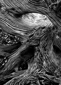Vincent Island Driftwood - National Wildlife Refuge - Florida Panhandle, by Clyde Butcher. Black and White Nature Photography. Trees and outdoors. Texture Photography, Close Up Photography, Macro Photography, Black And White Photography, Fine Art Photography, Landscape Photography, Magical Photography, Gothic Photography, Photography Sketchbook
