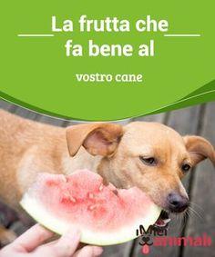 La frutta che fa bene al vostro cane Quando si tratta di #alimentazione del #cane, bisogna sempre fare #attenzione. Oggi vi parliamo della frutta che potete somministrare al vostro# animale. #Salute