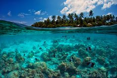 Under the thin line that separates our world from the watery kingdom lies such magnificence and beauty that we often forget is there. Scuba divers best kno