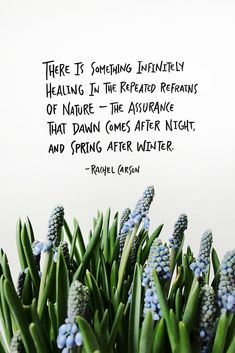 Spring has arrived.