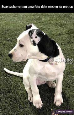 Cachorro com marca na orelha que parece... ele mesmo...