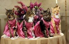 I'm thinking pink for the bridesmaid dresses. Although these cats don't seem to care for it...