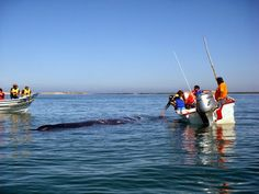 Whale Watching season is here - will you join us? Baja California Sur, Mexico. Blog: http://bajabybus.com/blog/item/27-lopez-mateos-whale-watching