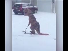 Dinosaur is shoveling snow