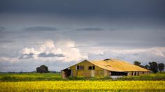 Abandoned shed with canola South Australia, Abandoned, Landscapes, Shed, Cabin, House Styles, Home Decor, Left Out, Paisajes