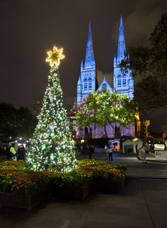 Christmas projections on St Mary's Cathedral, Sydney. - ✮ www.pinterest.com/WhoLoves/Australia ✮ #Australia