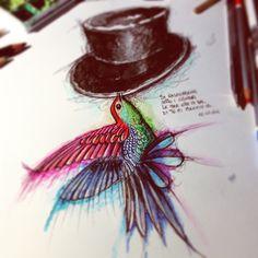 illustrazioni sketch barba cappelli watercolor blackink paint art  colibrì