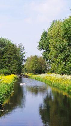 Goudse Hout, The Netherlands (foto D. Leopold)