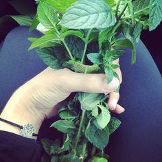 Pretty mint bouquet