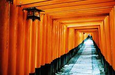 Continuous Orange by Misha Ashton Photography