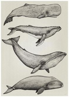 Whale Print, By Nathan Miller Printed on Torentto Paper  Whales done with dots...  drawn with 0.05  & 0.1 Black STAEDTLER Pigment liner Pens