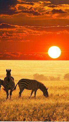 Zebras, Sunsets, Landscapes, Nature, Africa ~