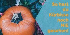 Kürbisse   #herbst #pumpkin #pumpkins #halloween