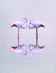 ~~Flamingos x2, twice by CostaDinos~~