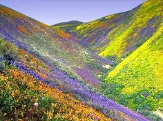 The Golan Heights in spring time. Well worth seeing