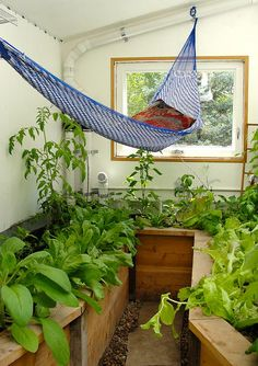 """See our web site for additional relevant information on """"greenhouse design layout"""". It is actually an exceptional area to learn more. Greenhouse Farming, Miniature Greenhouse, Best Greenhouse, Backyard Greenhouse, Greenhouse Plans, Nice Backyard, Permaculture Garden, Greenhouse Wedding, Commercial Greenhouse"""