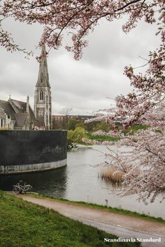 LANGELINIE PARK - Three Places to See Cherry Blossoms in Copenhagen