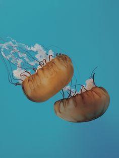 Jellyfish | VSCO Grid