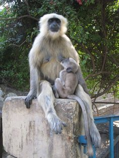 I took this picture in Rishikesh, India. These monkeys are the just the sweetest.  So calm and peaceful.