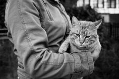 Adorable Animals, Wordpress, Black And White, Blog, Pictures, Photographers, Animales, Black N White, Black White