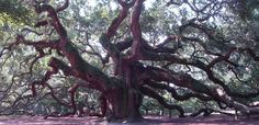 Angel Oak Park South Carolina