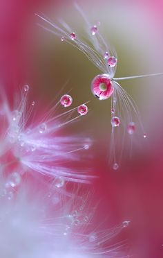 Pink and green - macro photography with water drops Reflection Photos, Reflection Photography, Nature Photography, Levitation Photography, Photography Flowers, Exposure Photography, Winter Photography, Abstract Photography, Beach Photography