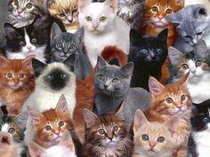 Cat Collage Wallpaper
