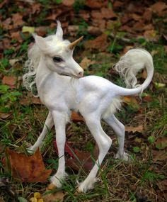 Small Unicorns.. Cuteee !!!