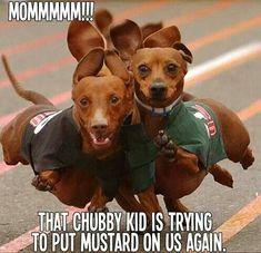 Weiner dogs!                                                                                                                                                      More