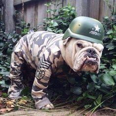 John's Bulldogs :-o