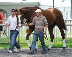 Shackleford schooling in the Belmont Park paddock earlier this afternoon. Luv this guy.