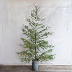 little christmas tree for apartment...Fresh Cut Subalpine Fir