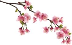 Cherry Blossom, Floral Wreath, Hair Accessories, Plants, Flowers, Spring, Flower Crowns, Flora, Cherry Blossoms