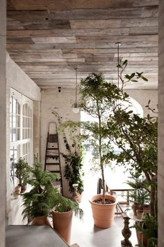 The Viking Table Reimagined: Restaurant Höst in Copenhagen : Remodelista (It's the plants and reclaimed wood ceiling that're appealing. Pallet Ceiling, Plank Ceiling, Porch Ceiling, Timber Ceiling, Timber Roof, Bedroom Ceiling, Indoor Garden, Indoor Plants, Home And Garden