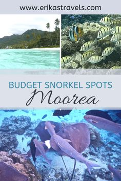 This guide to snorkeling in Moorea on a budget highlights the best places to snorkel in Moorea. Whether you're a backpacker or on your French Polynesia honeymoon, you won't want to miss these must-see underwater locations. Underwater Photos, Underwater World, Underwater Photography, Photography Tips, Nature Photography, Travel Photography, Street Photography, Landscape Photography, Portrait Photography