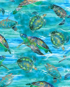Life's a Beach - Caribbean Sea Turtles - Turquoise