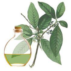 O óleo essencial de Litsea Cubeba é um óleo essencial com efeito calmante…