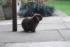 Bunny takes some air on the patio - June 7, 2012
